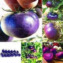 11.11 200 шт./пакет фиолетовый и ни в коем случае плодов томата Семена фрукты и овощи семена Помидоры Семена для дома и сада