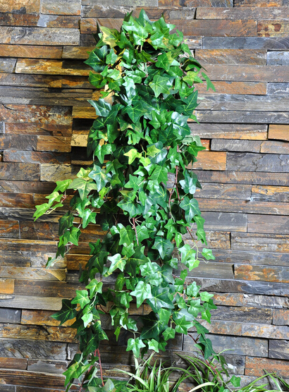 compare prices on flowering evergreen vines online shopping/buy, Beautiful flower