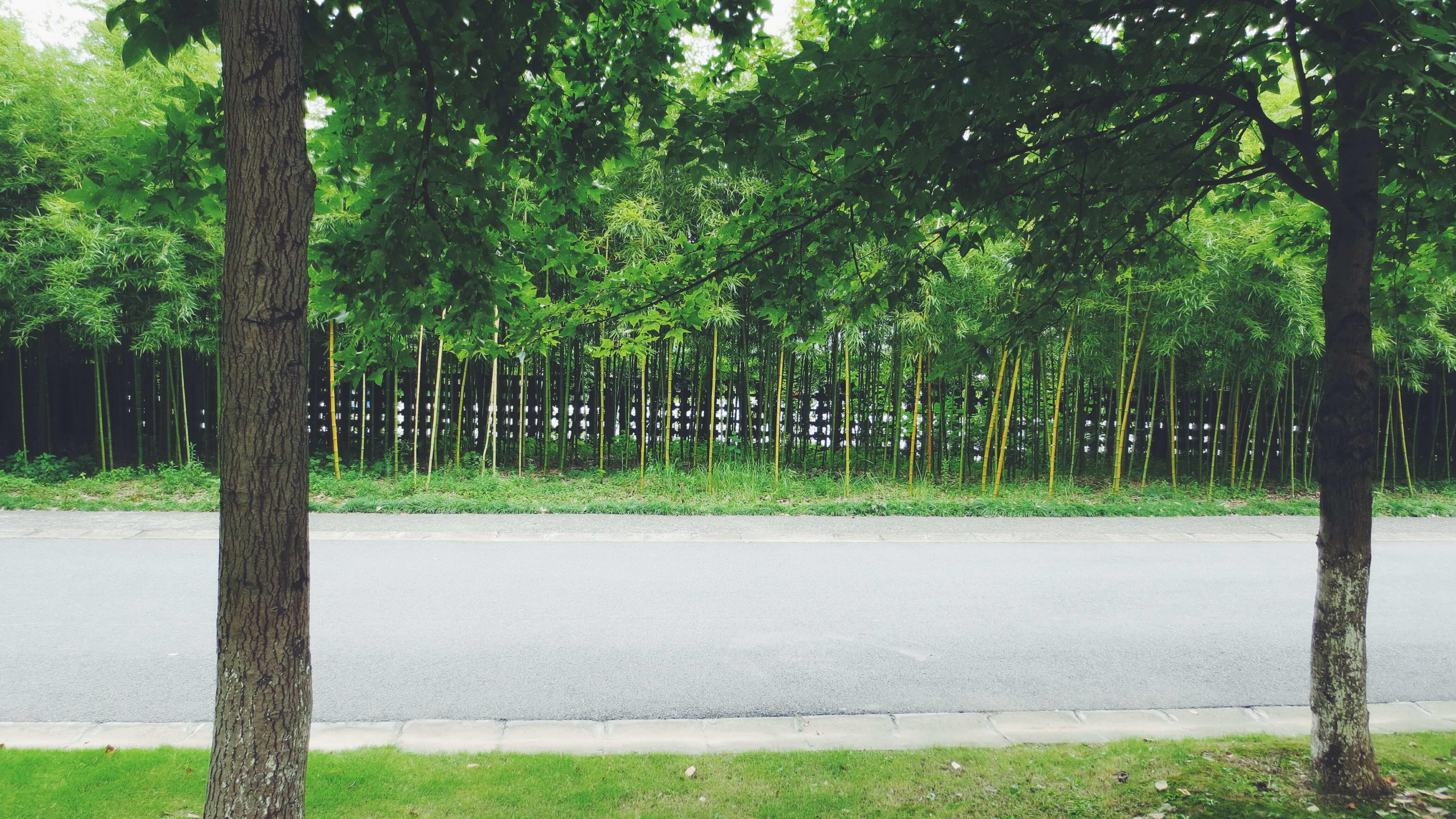 校园的边界