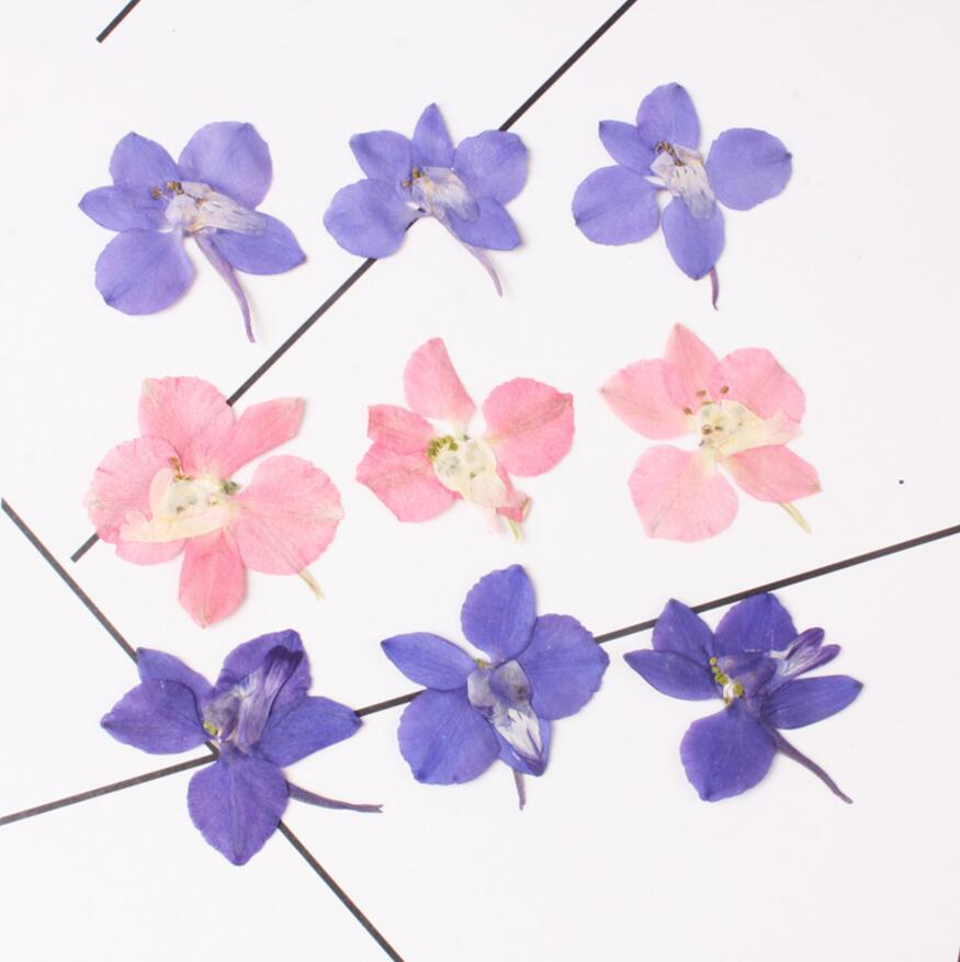 120pcs Pressed Dried Flower Gaura lindheimeri Filler For Epoxy Resin Jewelry Making Postcard Frame Phone Case Craft DIY