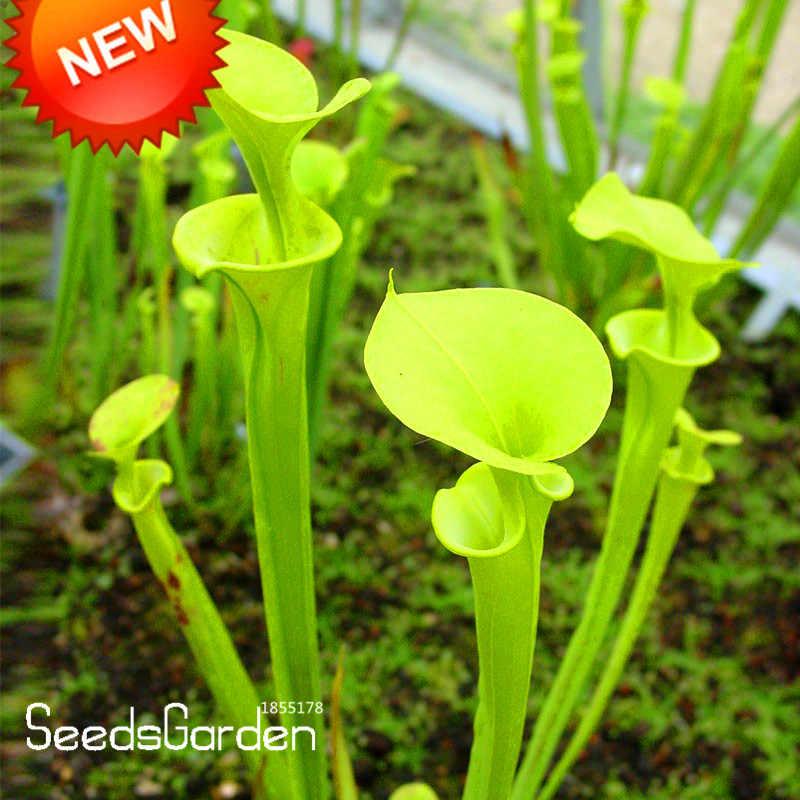 Novo 2018! Nepenthes bonsai Flores e Ervas Plantas Carnívoras Pegar Insetos 50 peças/saco Purificar o Ar, # IKKD6T