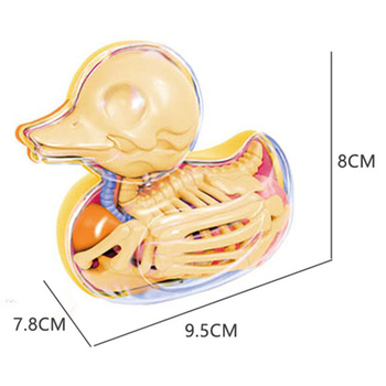 4D Small yellow duck Intelligence Assembling Toy Assembling toy Perspective Anatomy Model DIY Popular Science Appliances фото