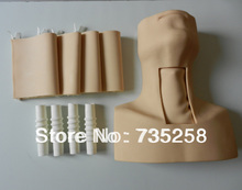 Tracheostomy Simulator. Senior Cricothyroid Membrane Puncture and Tracheotomy Training Model