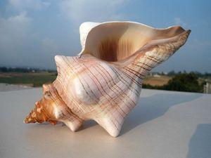 HappyKiss Natural winding conch shells decorate wedding shooting props Fish tank aquarium decorations Aquarium accessories