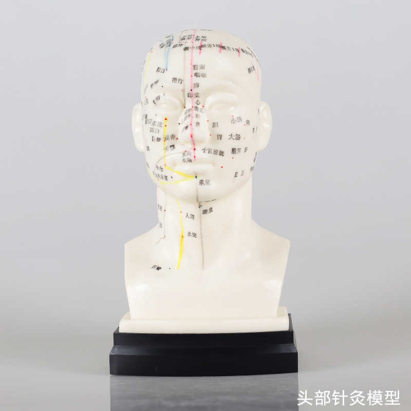 Detail Feedback Questions about head acupuncture point teaching