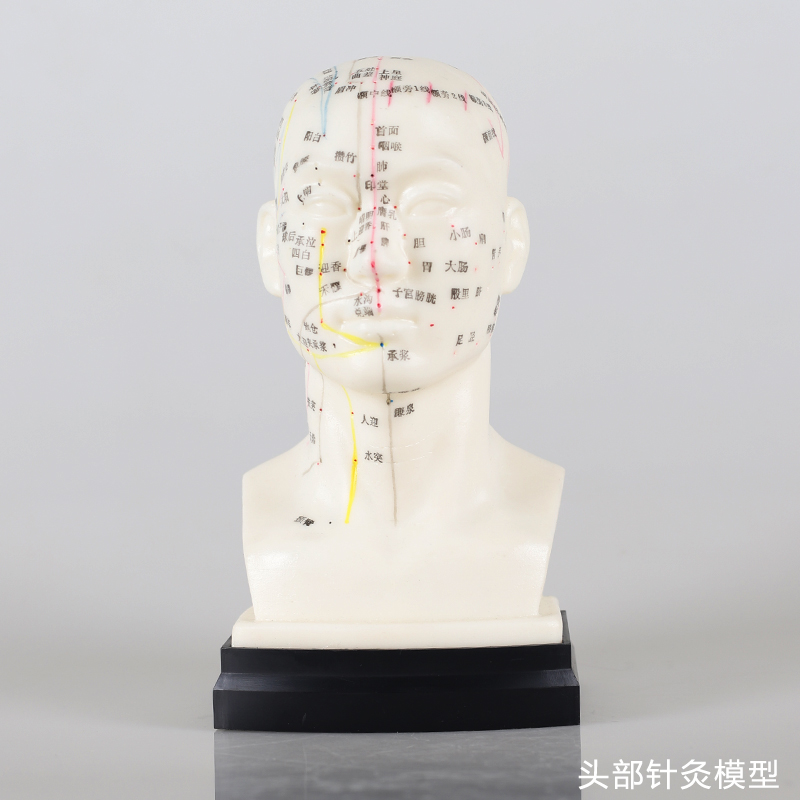 Chinese Head acupuncture model Head Acupuncture Point Model he Human Head Acupuncture Point Model Head Meridian Model hd hard 60 cm male human acupuncture acupoint model muscle anatomy human body acupuncture point model human acupoints model