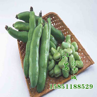 10pcs A new broad bean seeds Meidou cowpea seeds lentils and tasty vegetable seeds grow easily  Home gardening landscape