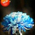 Потеря Акция! 100 шт./упак. Редкий Голубой Белый Цвет Семена Хризантемы Morifolium Семена Цветок Растение в горшке Дома Сад, # VM8ZQ1