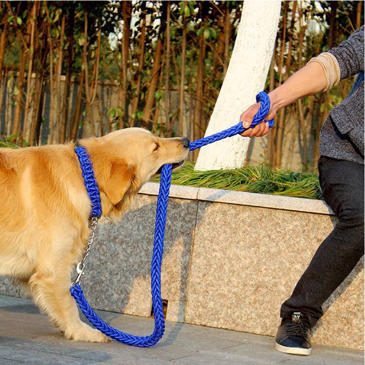 laisse coulissante chien