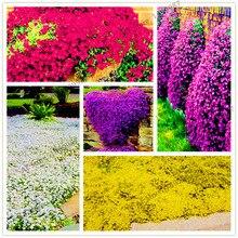 205 шт./упак. рок Кресс бонсай многолетний Чабрец обыкновенный завод или синий цветок крышка естественного роста для дома и сада