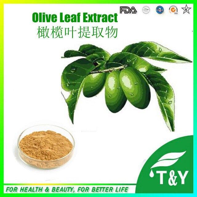 100% extrato natural da planta olive leaf extrato de venda quente 100g