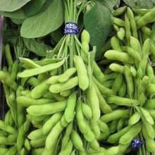 2019 Sale New Summer Blooming Plants Seeds Sementes Semillas Soy Bean Bonsai Glycine Edamame Vegetable Seasons Garden 10 Pcs