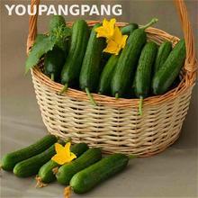 200pcs Japanese Cucumber Seeds
