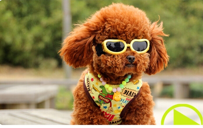 Doggie Sunglasses Goggles  aliexpress com dog glasses pet sunglasses goggles pet
