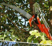 High Branch Saws Twist Tree Scissors