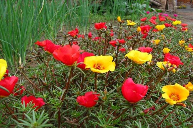 planters sunflower seeds - Popular Planters Sunflower Seeds-Buy Cheap Planters Sunflower