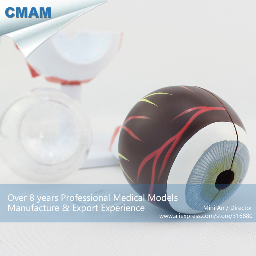 CMAM EYE02 Large 3x Life Size 6 Parts Human Eyeball Anatomy Study Model Medical font b