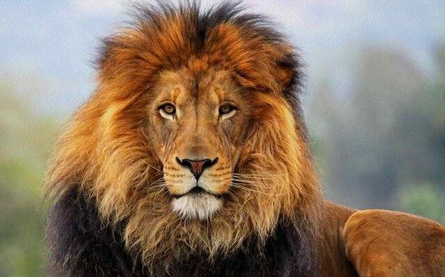 Lion King Home Decor