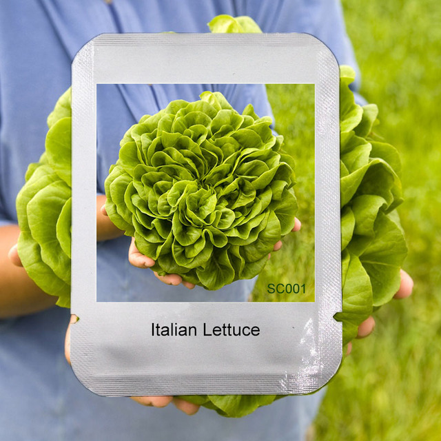 100 Italian Lettuce Seeds good taste ,easy to grow,Professional Pack,great salad choice ,DIY Home garden seeds vegetables,#SC001