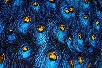 2014 Retro Blue Peacock Feather Printed Fabrics Micro Bomb Satin Fabric Handbags DIY Handmade Clothing Fabrics