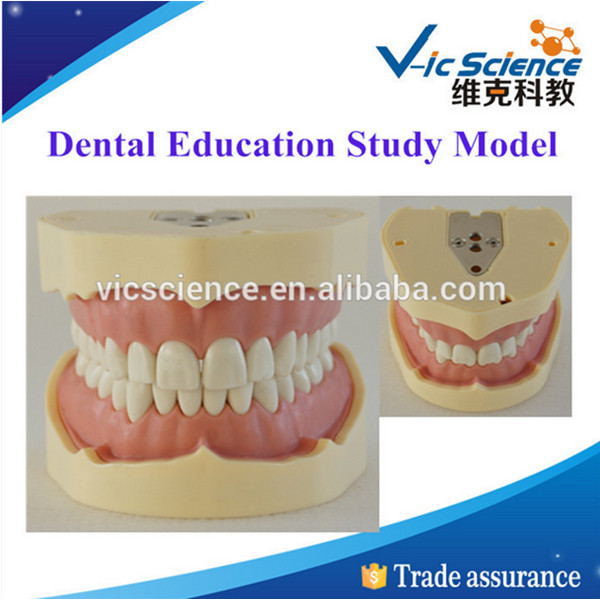 100% Factory Price Dental Education Study Model lego education 9689 простые механизмы