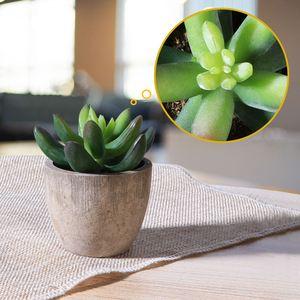 Image 4 - Mini bonsaï artificiel plantes succulentes