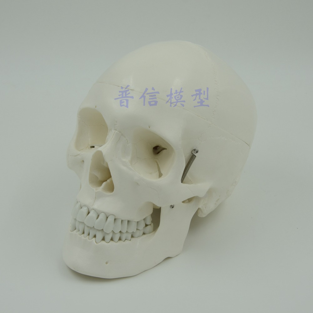 DongYun brand Human skull model skeleton model Medical Science teaching supplies airsoft adults cs field game skeleton warrior skull paintball mask