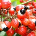 50g Guarana extract powder reduce fatigue Improve Cognition Promote Digestion Slimming Figure Pain Relief