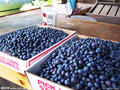 200 американский гигант черники плодов Прорастания семян 95% +, редких фруктовых деревьев семена для дома сад посадки