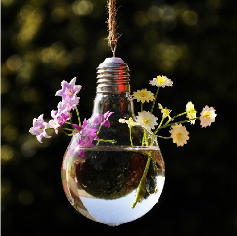 Free Shipping 6pcs Hot Sale 148 Cm Glass Bulb Vase Succulent