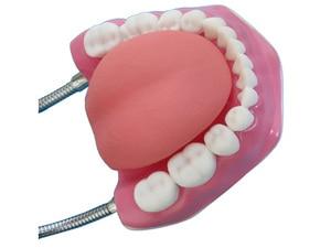 Image 2 - באיכות גבוהה 6 פעמים גדול שיניים דגם שיניים דגם מיוחד קישוט רופא שיניים מרפאת אישית דקורטיבי צלמיות