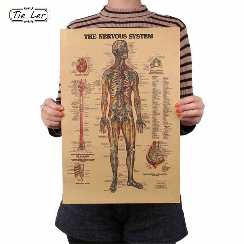 TIE LER Adesivo De Parede Vintage Style Retro Paper Poster Giftsthe Muscles Of The Body Structure Wall Sticker