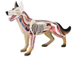 4d chien chat cheval grenouille requin ours cochon modèle d'anatomie squelette médical assemblage jouet