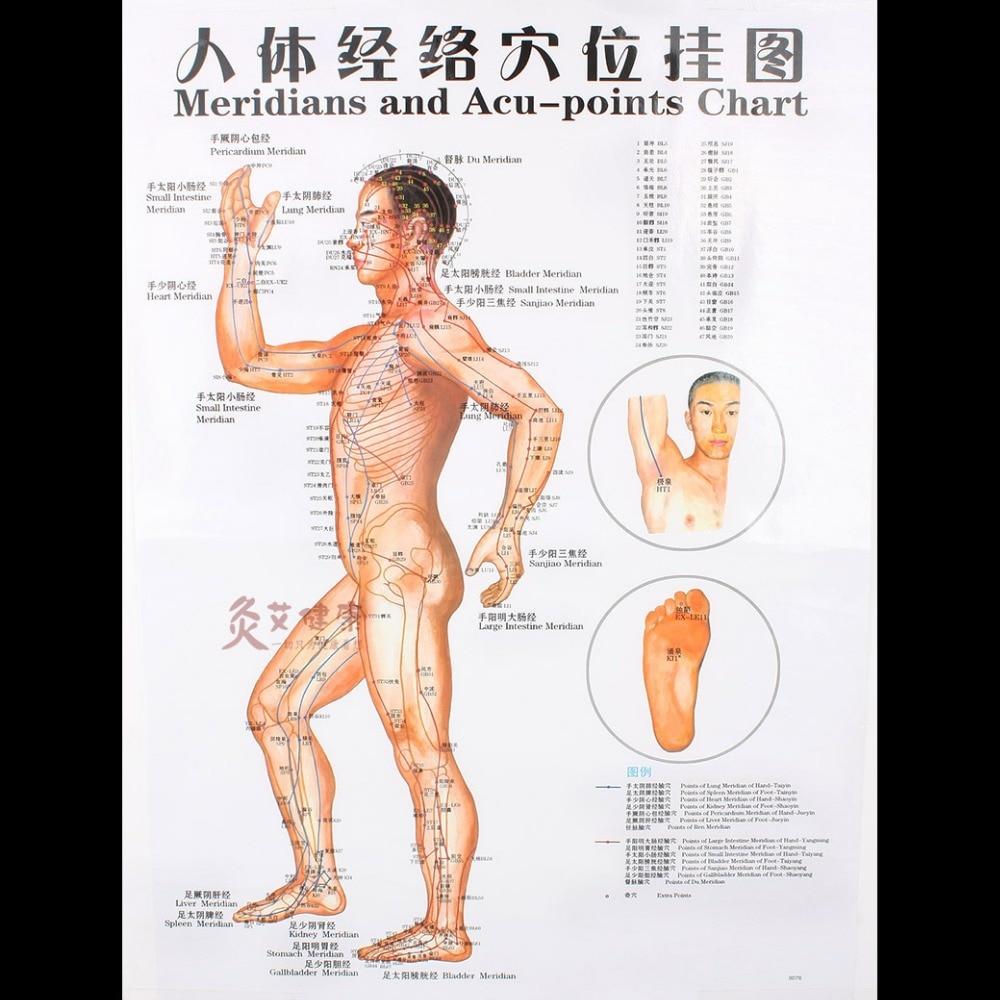Claro pared lateral mapa el cuerpo humano carta meridiano puntos de ...