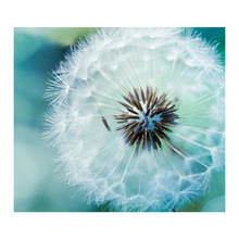 5d diy full diamond painting cross stitch  embroidery Dandelion mosaic flower picture Home Decor