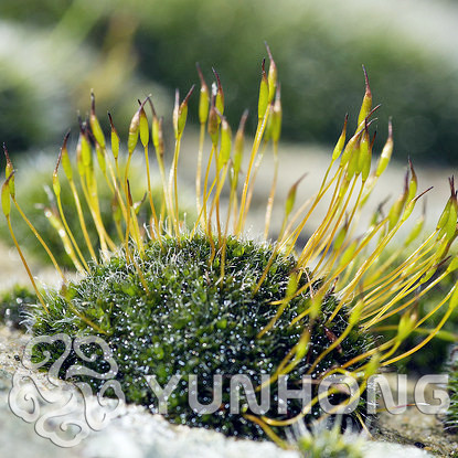 яванский мох живой заказать на aliexpress