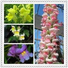 200 seeds/pack antirrhinum snapdragon seeds fragrant potted flower seeds,bonsai plant home garden