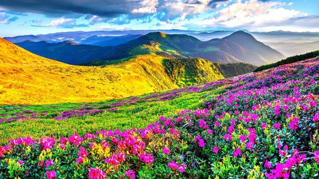 Spring Mountain Landscape Flowers Purple Colored Hills: 2017 # HOME TOP Art Painting MOUNTAIN WILD FLOWERS Hills