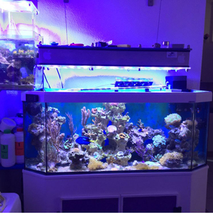 Image 4 - 10 個本物のオリジナルエピスターチップ 3 ワット led 電球ダイオードランプビーズ 200lm 220lm ホワイト/レッド/イエロー/ブルー/グリーン/rgb/紫外線 led 電球ライト