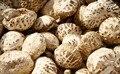 0.1 kg Hight quanlity material Nuevo alimento comida comida China Chino Alimentos Secos Hongos Shiitake Secas Para el cuidado de la salud