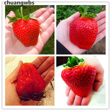 300pcs/bag fruit strawberry giant plant Red Strawberry Fruit bonsai delicious plants gift for garden