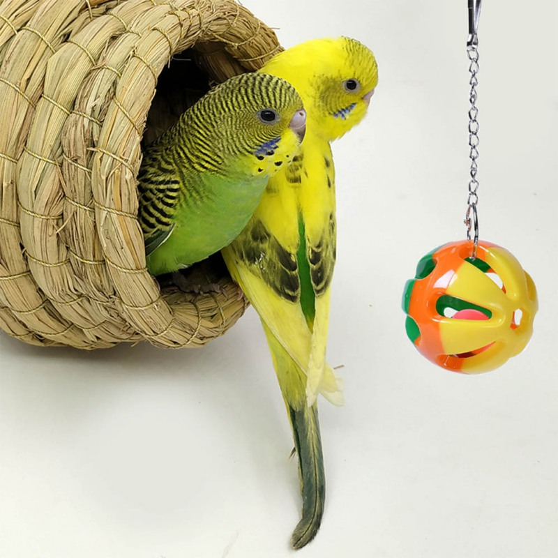 2019 new arrival Pet Bird Supplies Parrot Toys Colour Hanging Bell Cage Toys for Parrots Bird Squirrel Funny Chain Swing Toy