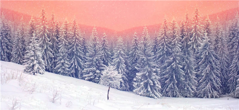 KIDNIU Photography Background Vinyl Studio Props Winter Snow Wallpaper Photo Screen Backdrops Trees 9x5ft win1410 5 x 10ft vinyl photography background for studio photo props green screen photographic backdrops non woven 160 x 300cm