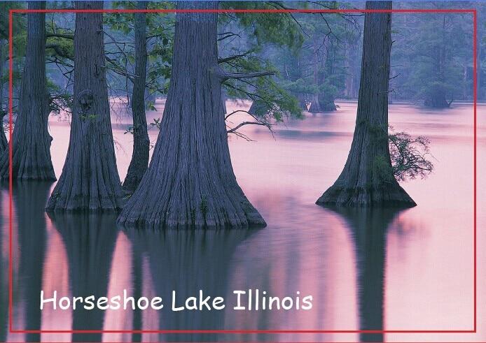Cypress Trees Horseshoe Lake Conservation Area Illinois Travel Refrigerator Magnets 20497 Rectangle 78*54*3 mm