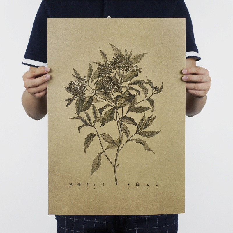 Hand drawing / Sketch B/ plant /kraft paper/bar poster/Retro Poster/decorative painting 51x35.5cm Free shipping
