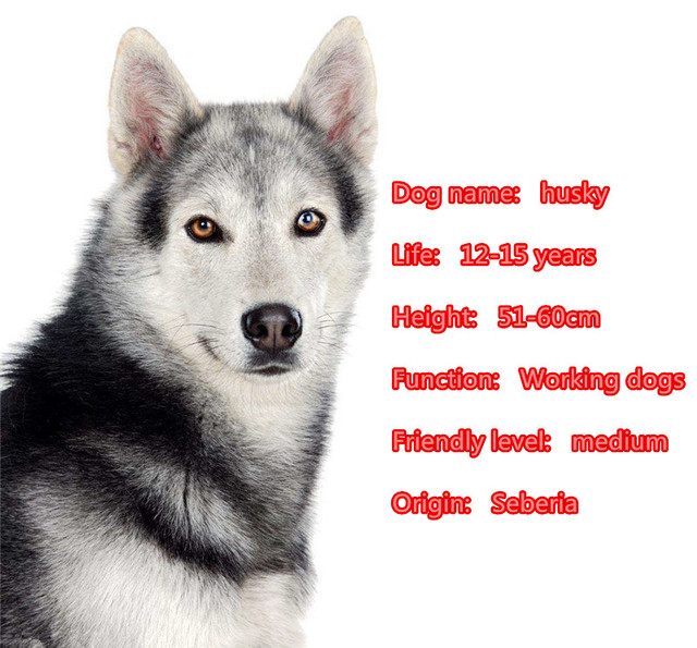 Купить mdogm хаски собака животные броши и булавки костюм милая забавная
