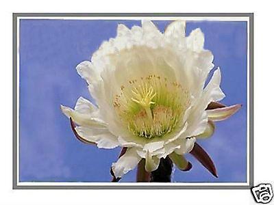 LAPTOP LCD SCREEN FOR HP PAVILION DV5-1235DX 15.4 WXGA