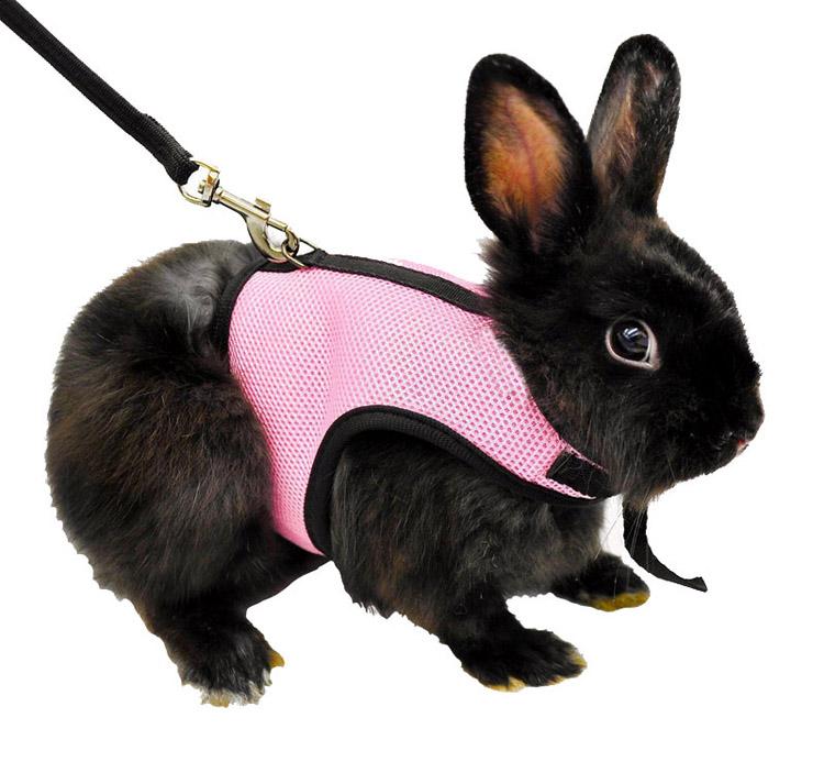 pink rabbit hamster