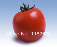 Chinese Kartik F1 Tomato Seeds bonsai fruit vegetable seeds (50 SEEDS)