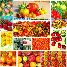 200pcs 24 KINDS Tomato Seeds mixed packed Purple Black Red Yellow Green Cherry Peach Pear Tomato Seed Organic for Garden plants